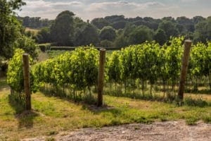 Ideal Wine Company - best English wines (1)
