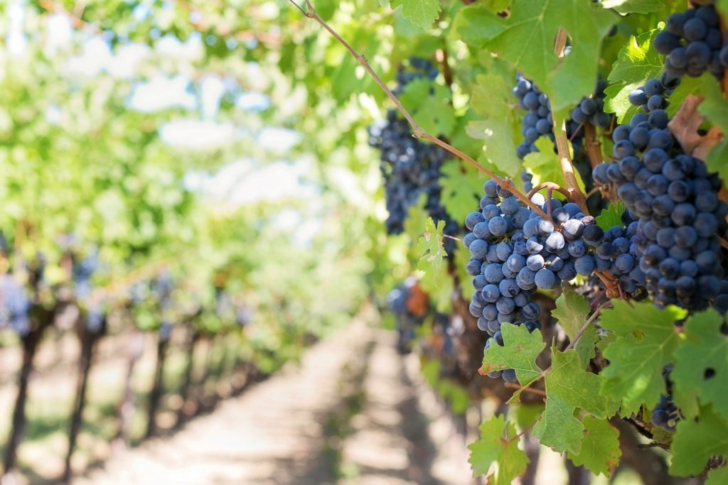 Ideal Wine Company - vineyard tours