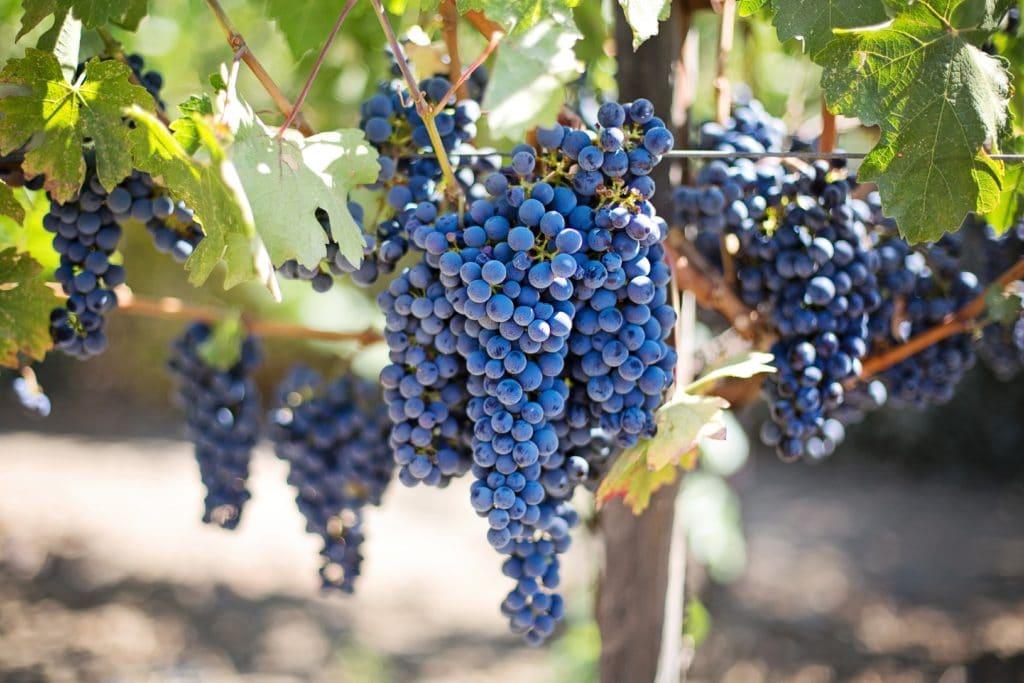 ideal wine company - unusual grape varieties