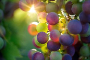 Barolo Ideal wine company