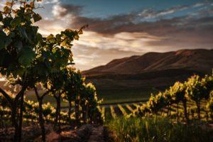 ideal wine company - Californian fine wines
