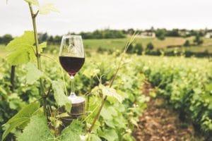 ideal wine company - the aroma of fine wine